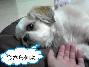 66imasara_2