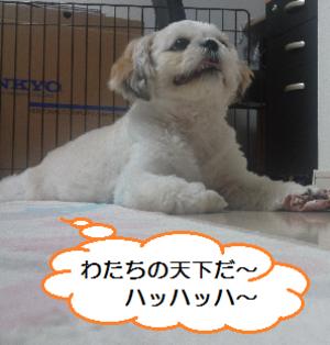 Shoku3