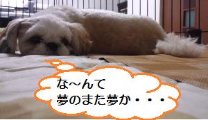 Shoku4