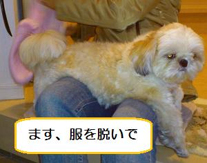 Asifuki2