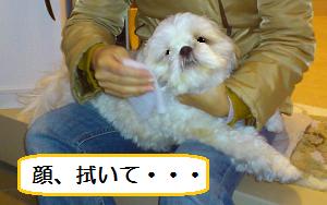 Asifuki3