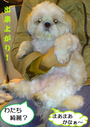 Asifuki6