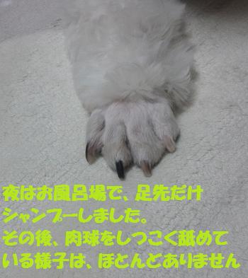 Fuki3