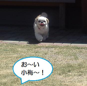 Yobu1