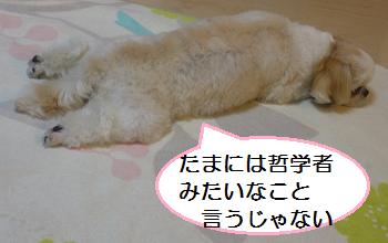 Teifu4