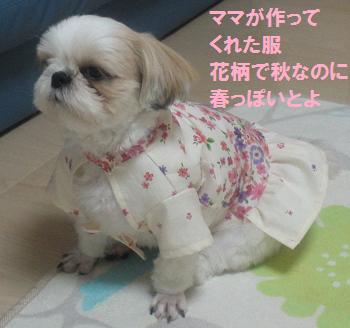 Akifuku1