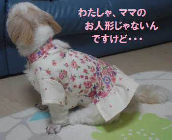 Akifuku3