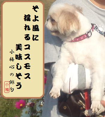 Kosumosu4_2